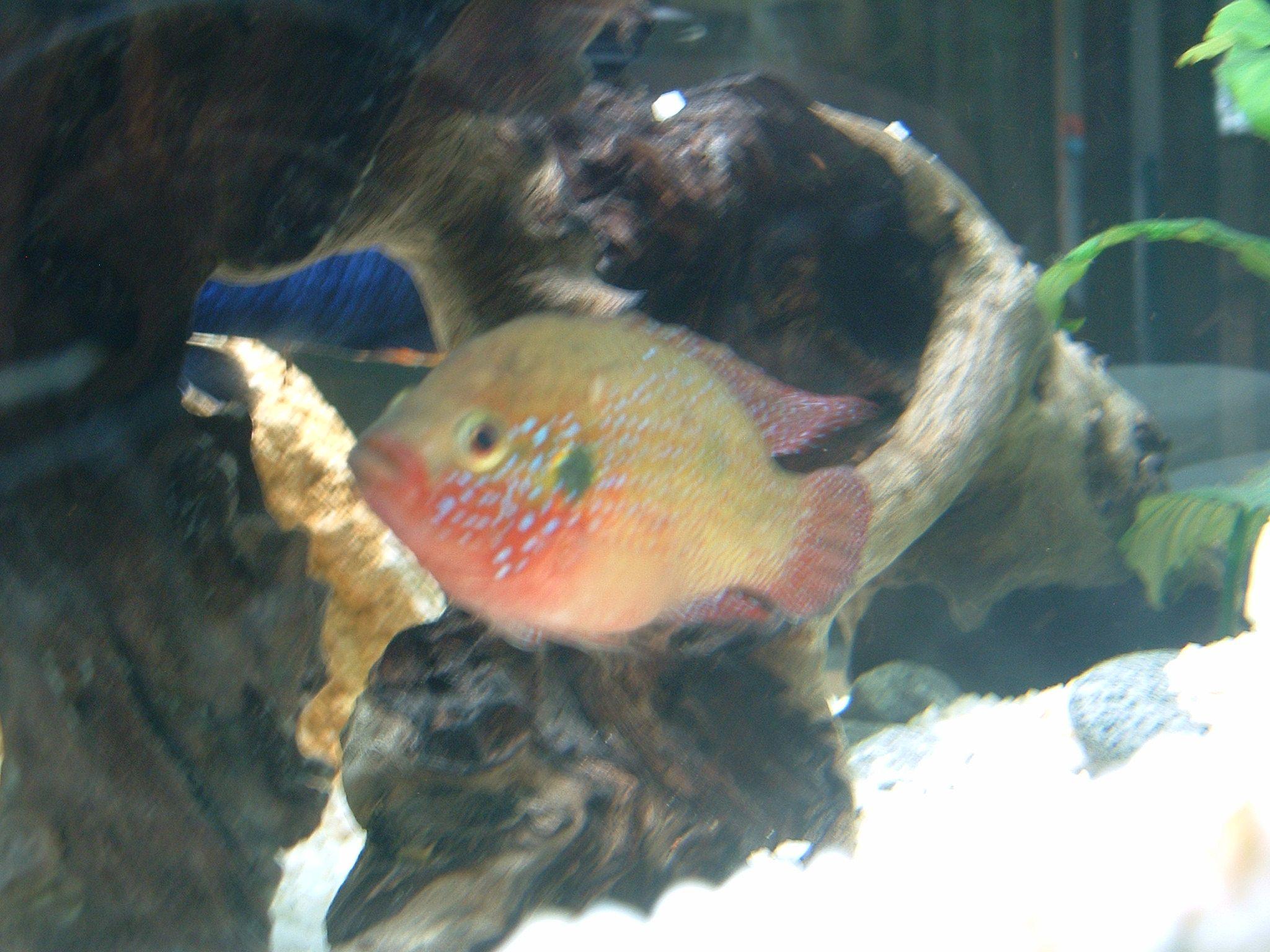 Retrouver en photo mes aquarium de cichlid s du lac malawi for Bac a poisson 500l